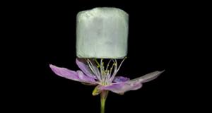 ce-nouveau-materiau-qui-pourrait-revolutionner-le-captage-du-co2