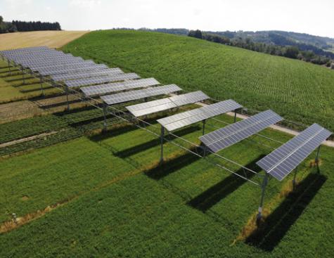 Pousser à l'ombre du solaire