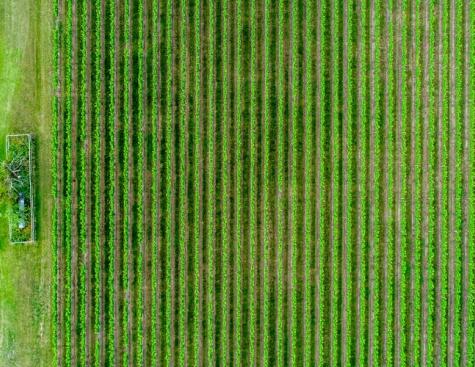 Energies renouvelables et ammoniac vert, nouveau terreau fertile et durable de l'agriculture ?