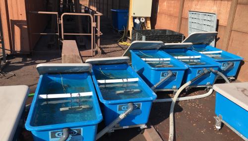 ENGIE Lab CRIGEN tests marine biopolymers against ship fouling