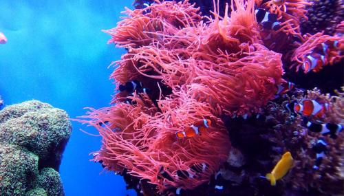 Du vert dans le grand bleu : ces solutions durables inspirées de la mer