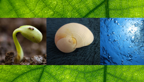 Captage et stockage du carbone : toutes les innovations sont dans la nature