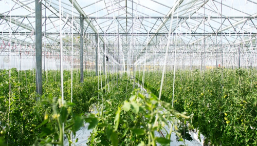 Agrivoltaïque, quand le solaire booste aussi la production agricole