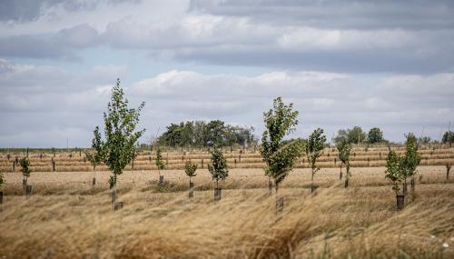 Chauves-souris, agroforesterie... ENGIE Green et la biodiversité
