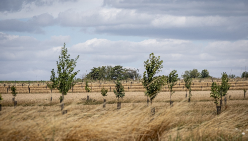Bats, agroforestry ... How ENGIE Green tackles biodiversity