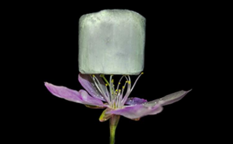 Ce nouveau matériau qui pourrait révolutionner le captage du CO2