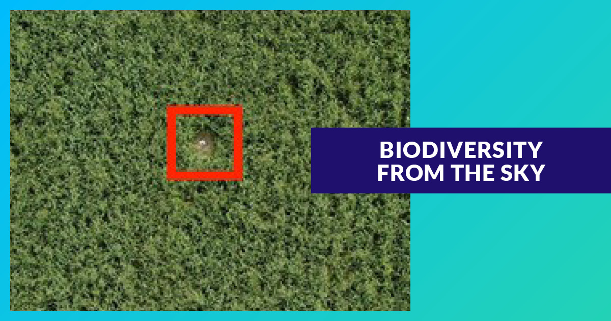 La biodiversité vue du ciel